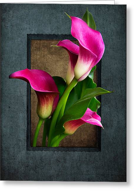 Purple Calla Lily Greeting Card