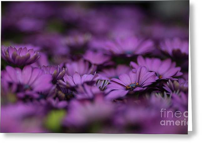 Purple Mood Greeting Card by Eva Lechner