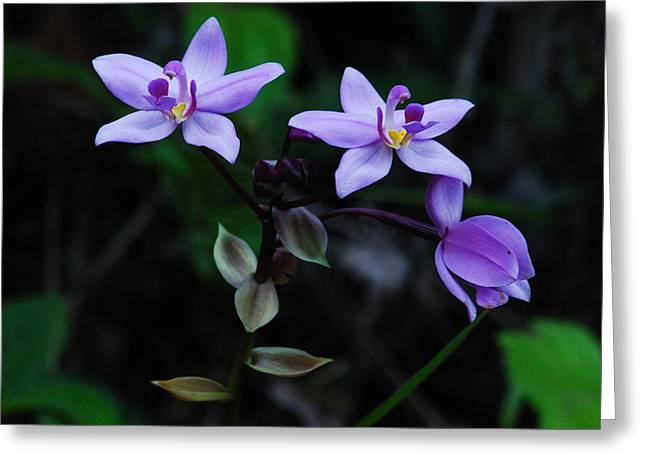 Purple Orchids 2 Greeting Card by Michael Peychich