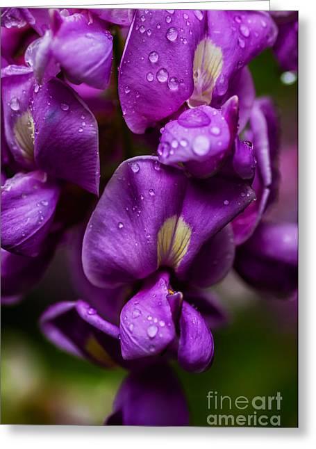Purple Robe Locust Greeting Card by Thomas R Fletcher