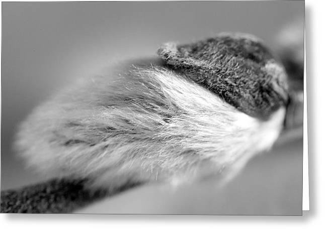 Fine art pussy photography — img 13
