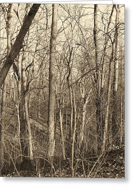 Quiet Greeting Card by Joseph Norvell