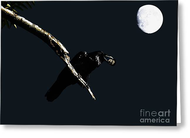 Quoth The Raven Nevermore Greeting Card by Wingsdomain Art and Photography