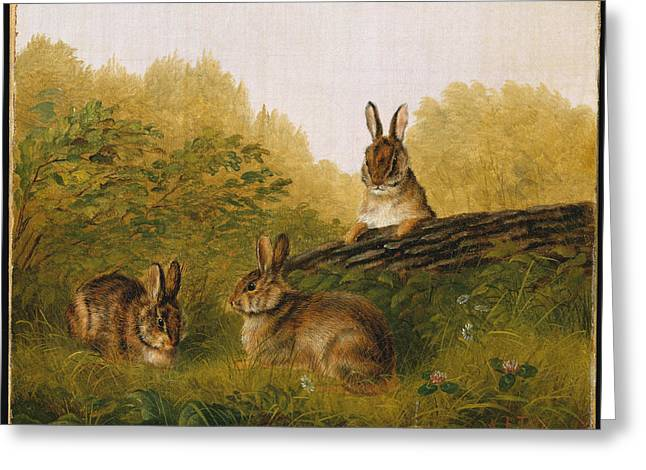 Rabbits On A Log Greeting Card by Arthur Fitzwilliam Tait