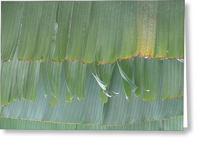 Best Sellers -  - Large Scale Greeting Cards - Ragged Edges Greeting Card by Florene Welebny