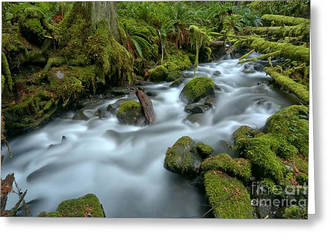 Rainforest Gusher Greeting Card by Adam Jewell