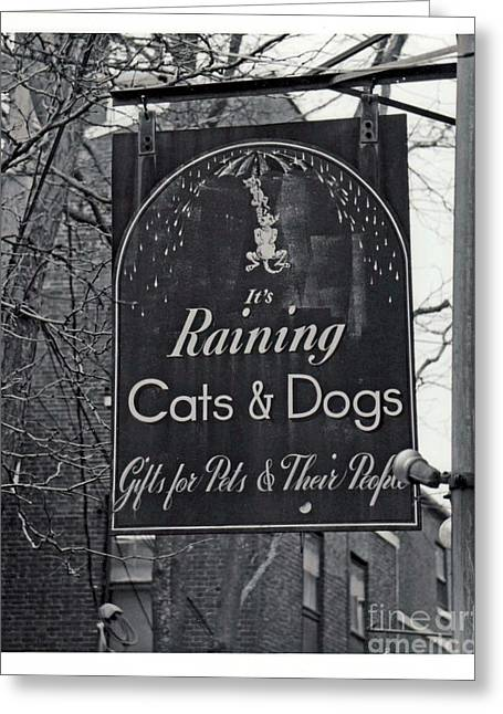 Greeting Card featuring the photograph Raining Cats And Dogs by Juls Adams