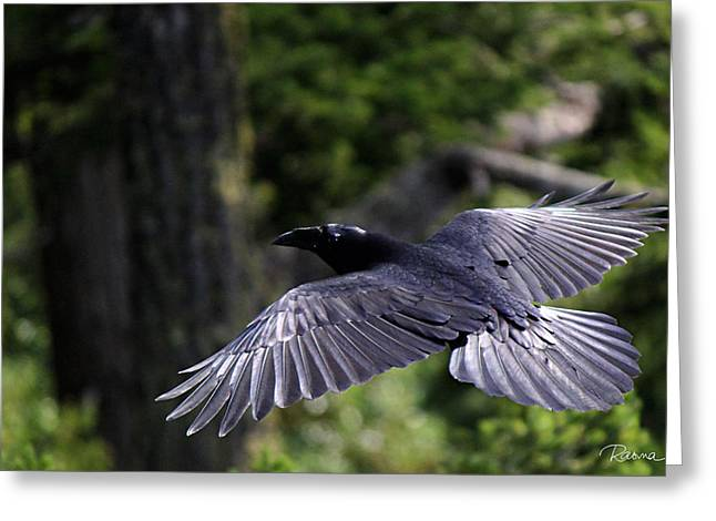 Raven Flight Greeting Card