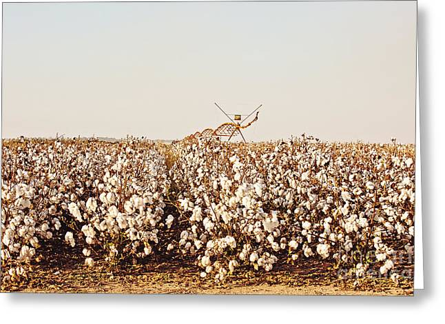 Ready For Picking Greeting Card by Scott Pellegrin