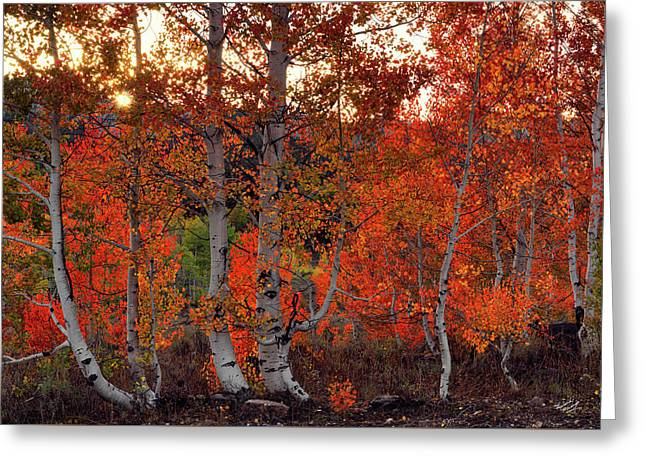 Red Aspens Greeting Card by Leland D Howard