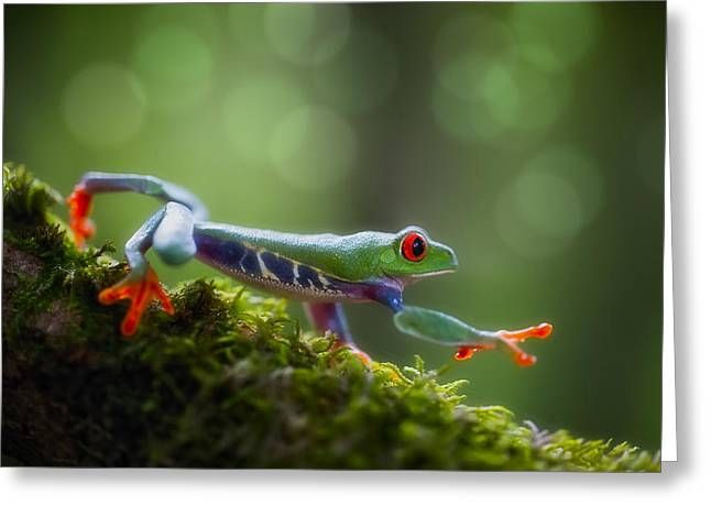 red eyed tree frog Costa Rica forest Greeting Card