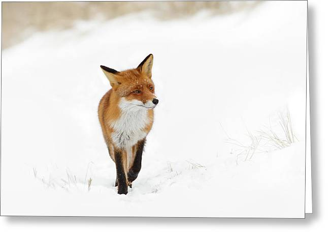 Red Fox In A White Winter Wonderland Greeting Card