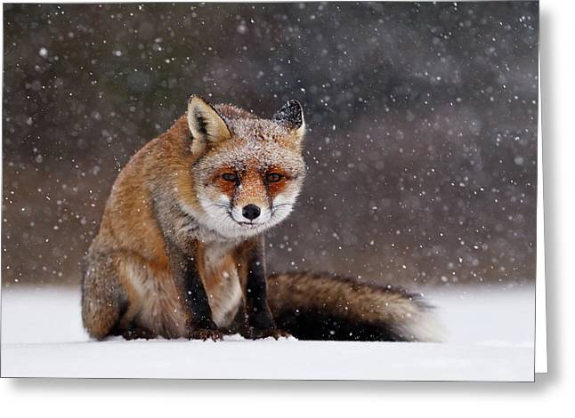 Red Fox Sitting In The Snow Greeting Card by Roeselien Raimond