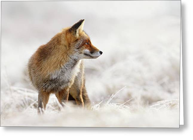 Red Fox, White World Greeting Card by Roeselien Raimond
