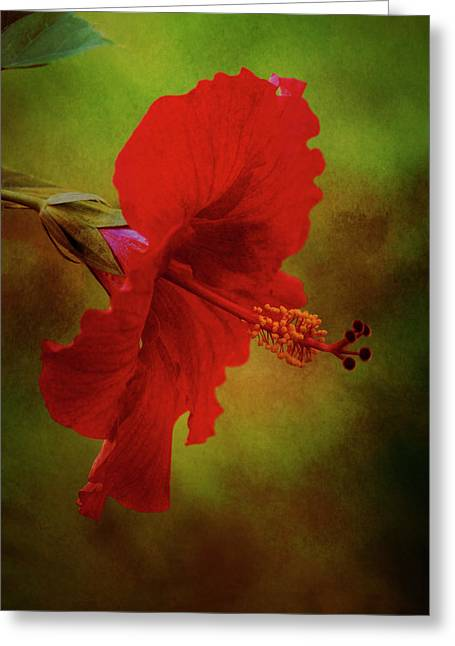 Red Hibiscus Art Greeting Card