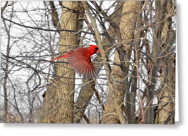 Red Like Cardinal In-flight Greeting Card
