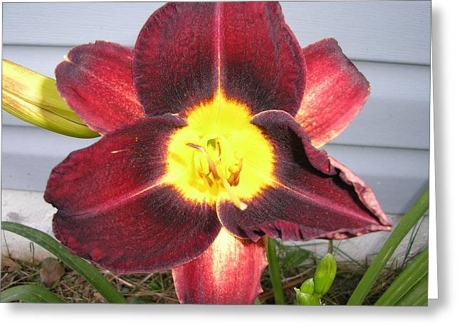 Red Lily Greeting Card by Tina Antoniades