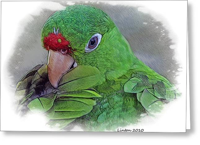 Red Lored Parrot Greeting Card by Larry Linton
