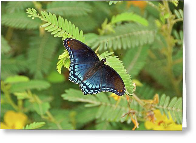Greeting Card featuring the photograph Red Spotted Purple Butterfly by Sandy Keeton