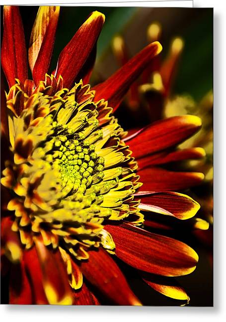 Red Greeting Card by Svetlana Sewell