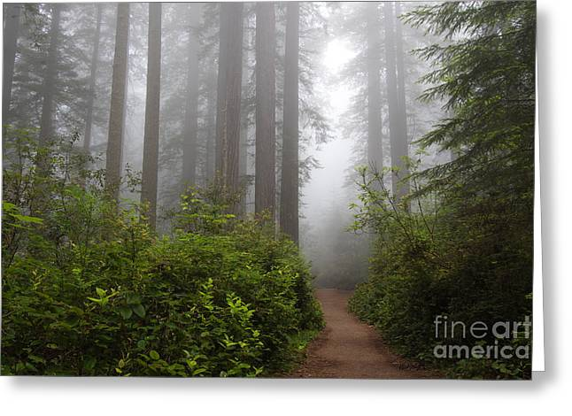 Redwood Grove Greeting Card