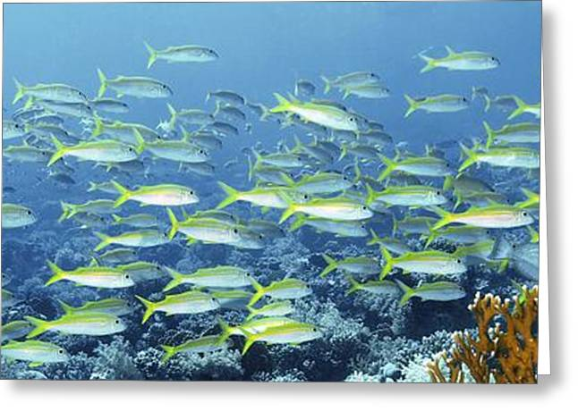 Sea Animals Greeting Cards - Reef Scene Greeting Card by Alexander Semenov