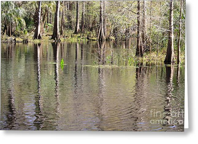 Reflection Of Cypress Trees Greeting Card