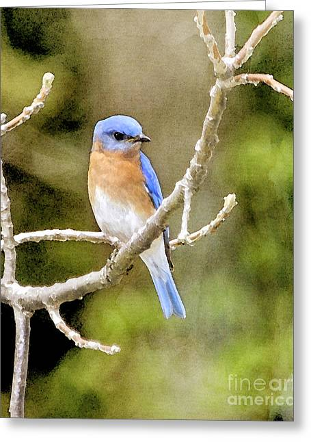 Greeting Card featuring the photograph Rhapsody In Blue by Betty LaRue