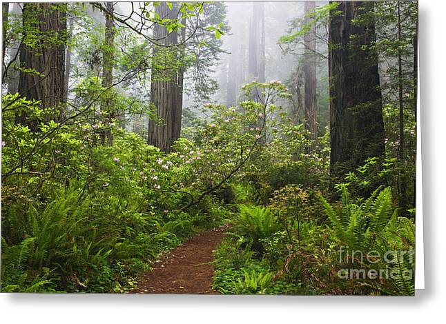 Rhododendrons In Redwood Forest Greeting Card by Inga Spence