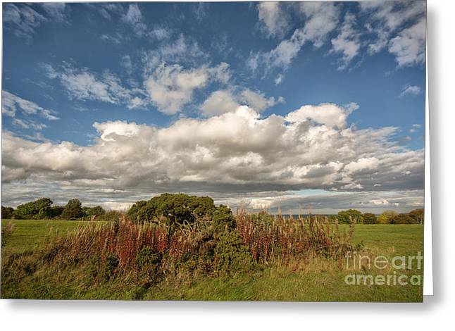 Richmond Racecourse Greeting Card by Nichola Denny