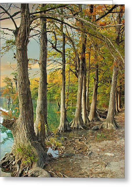 River Road Cypress Greeting Card by Robert Anschutz