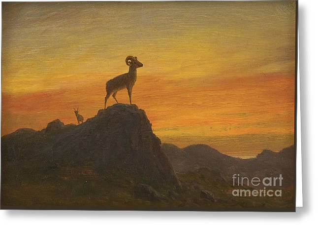 Rocky Mountain Sheep Greeting Card by MotionAge Designs