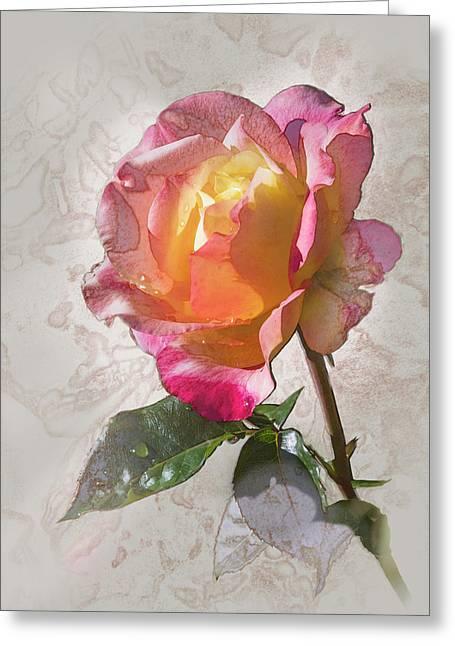 Rosa, 'glowing Peace' Greeting Card