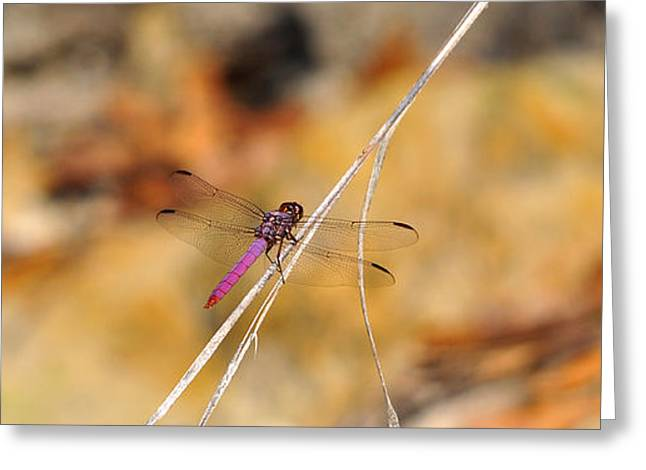 Greeting Card featuring the photograph Fuchsia Fly by Al Powell Photography USA