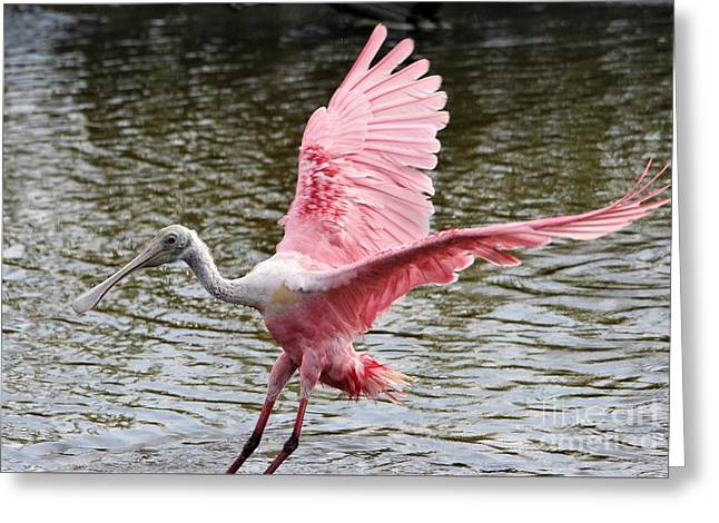 Roseate Spoonbill Wings Greeting Card