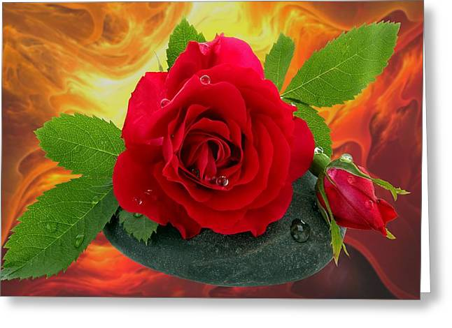 Roses 5 Greeting Card by Manfred Lutzius