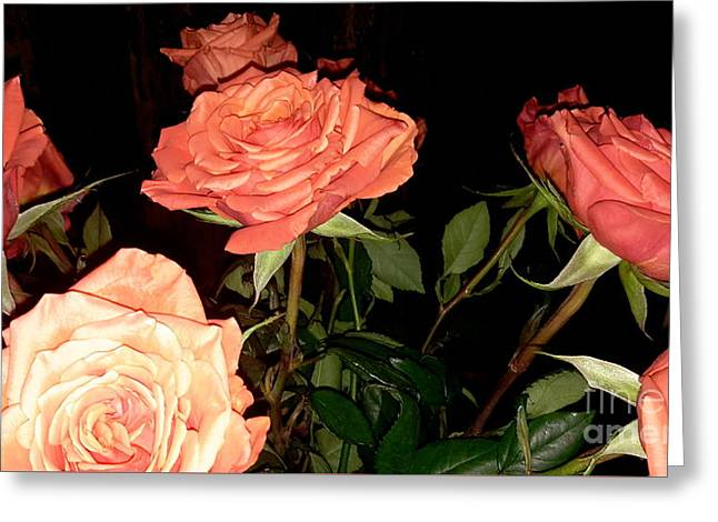 Roses For Holiday Greeting Card