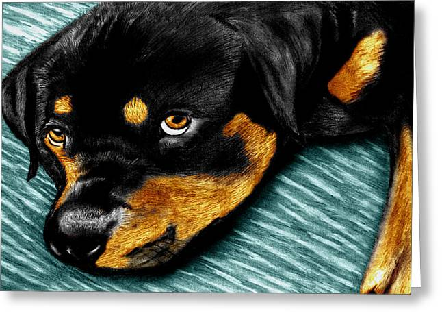 Dog Sketch Greeting Cards - Rotty Greeting Card by Peter Piatt