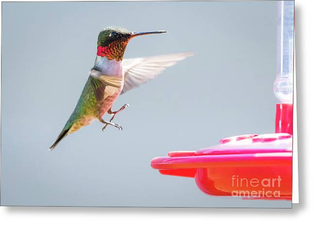 Greeting Card featuring the photograph Ruby-throated Hummingbird  by Ricky L Jones