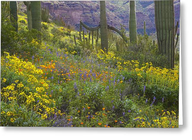 Saguaro Amid Flowering Lupine Greeting Card by Tim Fitzharris