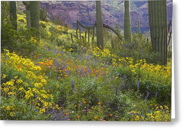 Saguaro Amid Flowering Lupine Greeting Card