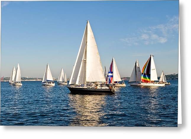 Sailboats Greeting Card by Tom Dowd