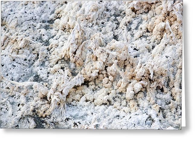 Salt Flats Greeting Card by Inga Spence