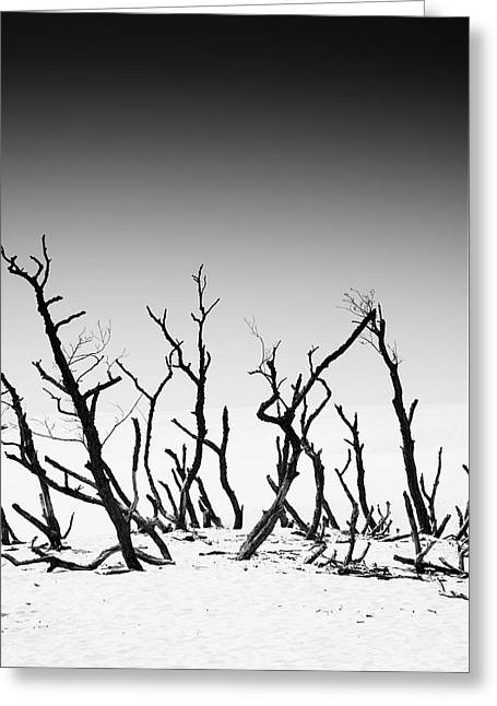 Sand Dune With Dead Trees Greeting Card by Chevy Fleet