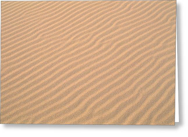 Oregon Dunes National Recreation Area Greeting Cards - Sand Patterns Greeting Card by Greg Vaughn - Printscapes