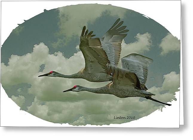 Sandhill Crane Pair Greeting Card by Larry Linton