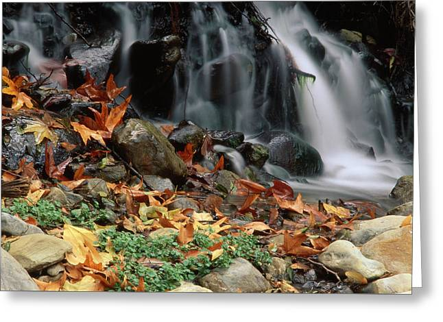 Santa Paula Creek Greeting Card by Soli Deo Gloria Wilderness And Wildlife Photography