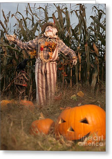 Scarecrow In A Corn Field Greeting Card