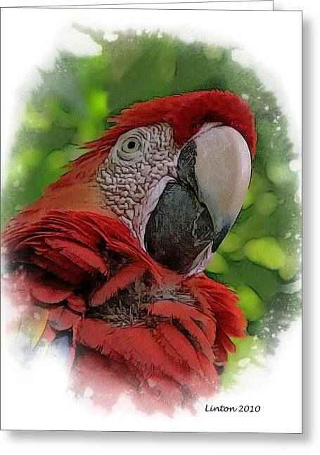Scarlet Macaw Greeting Card by Larry Linton