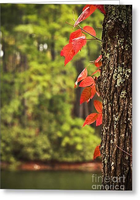Scenic Elder Lake Greeting Card